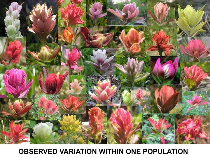 Variation In Plants Erika Hersch-Green